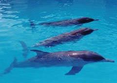 三亚热带海洋动物园天气