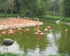 万宁兴隆热带海洋动物园天气